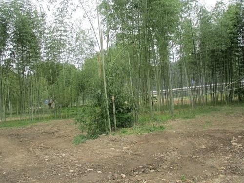 長良川の河川工事-なんだかヘンだよ_f0197754_00112885.jpg