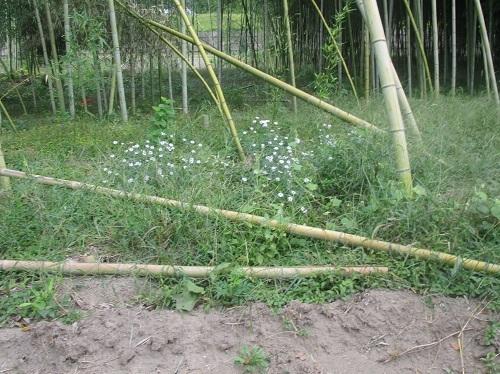 長良川の河川工事-なんだかヘンだよ_f0197754_00134729.jpg