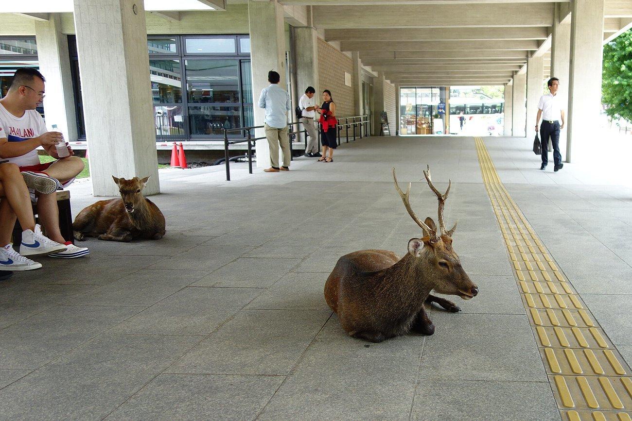 奈良の町並み散策_c0112559_07430806.jpg