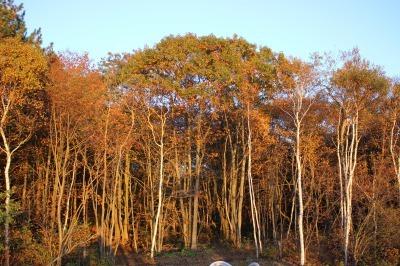 秋の夕暮れ_c0353373_21400337.jpg
