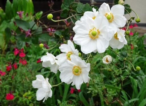 庭の千草も虫の音も  ♪_b0159780_09334995.jpg