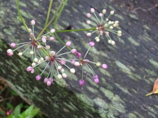 庭の千草も虫の音も  ♪_b0159780_09362597.jpg