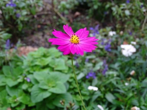 庭の千草も虫の音も  ♪_b0159780_09370709.jpg