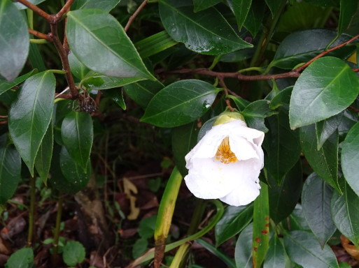 庭の千草も虫の音も  ♪_b0159780_09381884.jpg