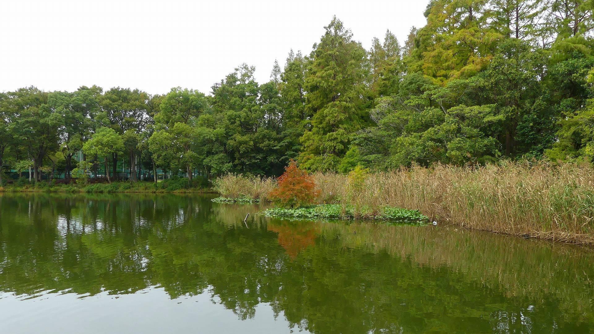 池の奥では・・・_a0185081_12201188.jpg