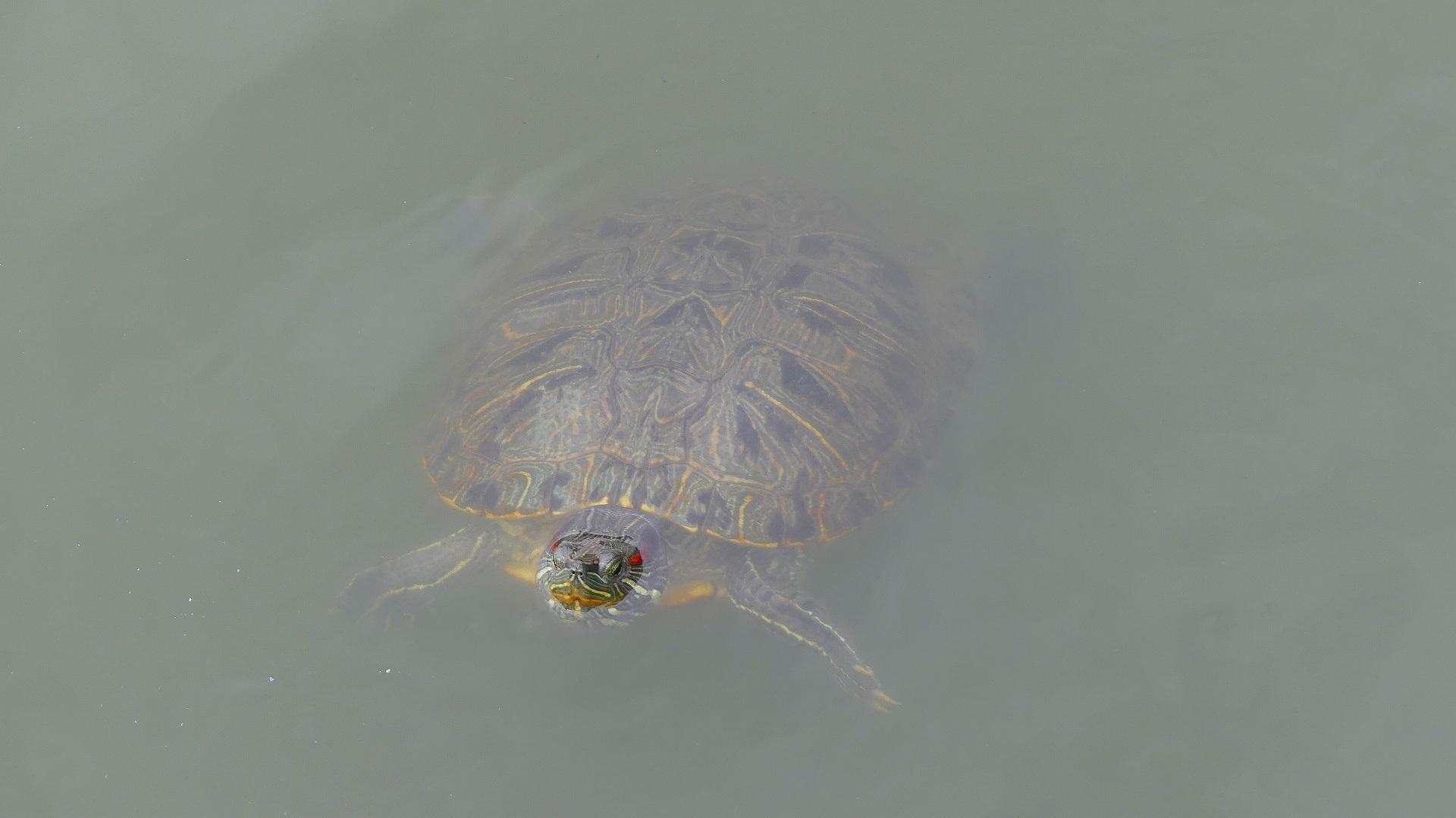 池の奥では・・・_a0185081_12215085.jpg