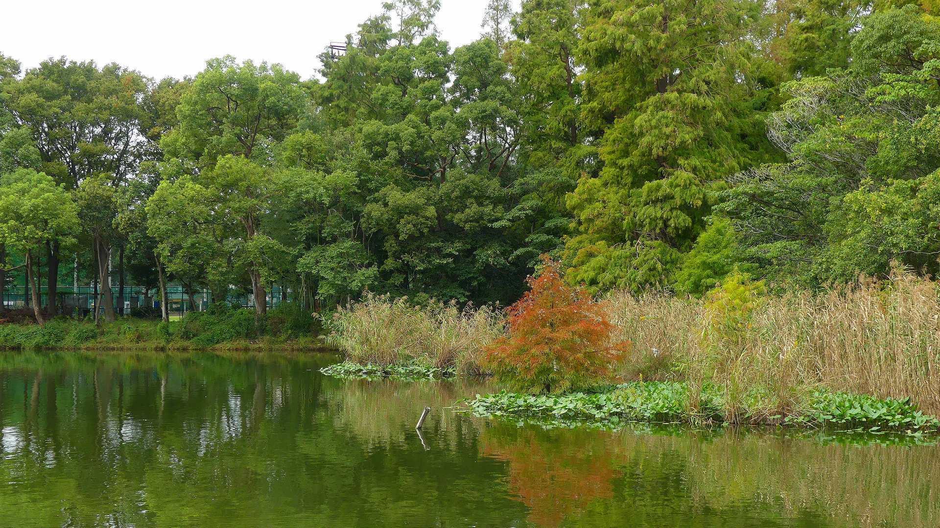 池の奥では・・・_a0185081_12225886.jpg