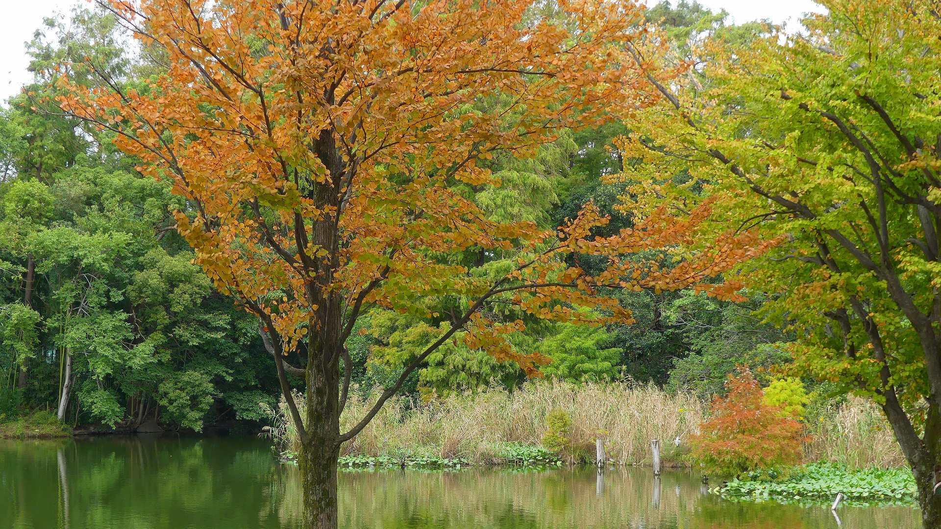 池の奥では・・・_a0185081_12231532.jpg
