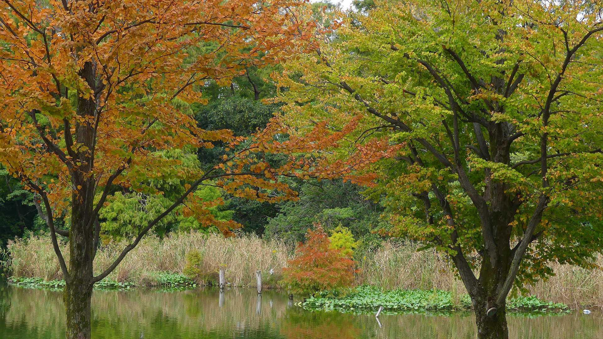 池の奥では・・・_a0185081_12233116.jpg