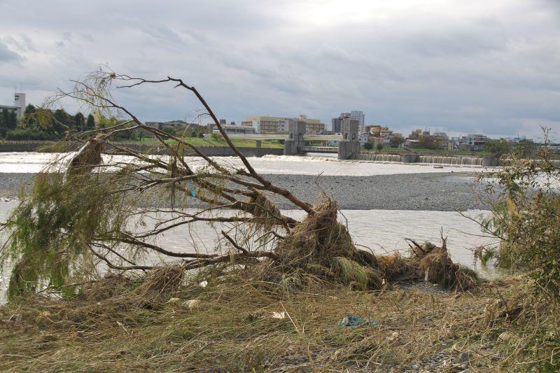30.台風19号通過3日後の多摩川河川敷_e0405185_22335260.jpg