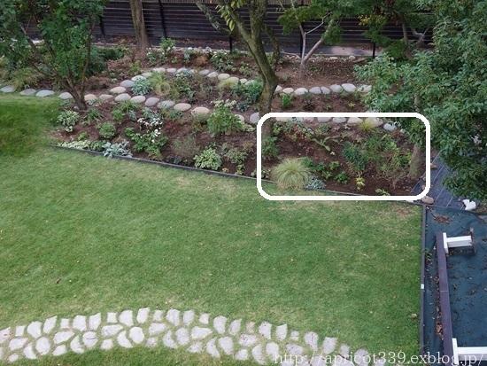 秋の庭しごと 宿根草と低木の植えつけ4_c0293787_09122228.jpg