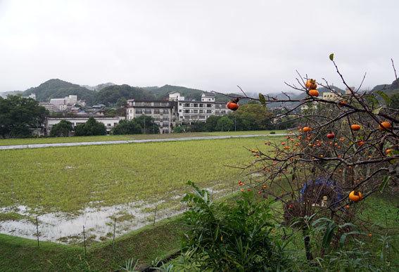 雨の朝は暗い_b0145296_09131105.jpg