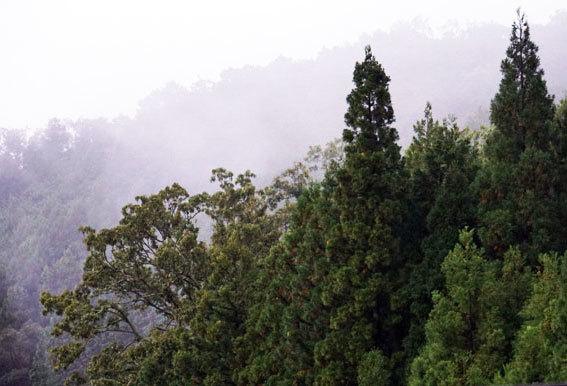 雨の朝は暗い_b0145296_09131762.jpg