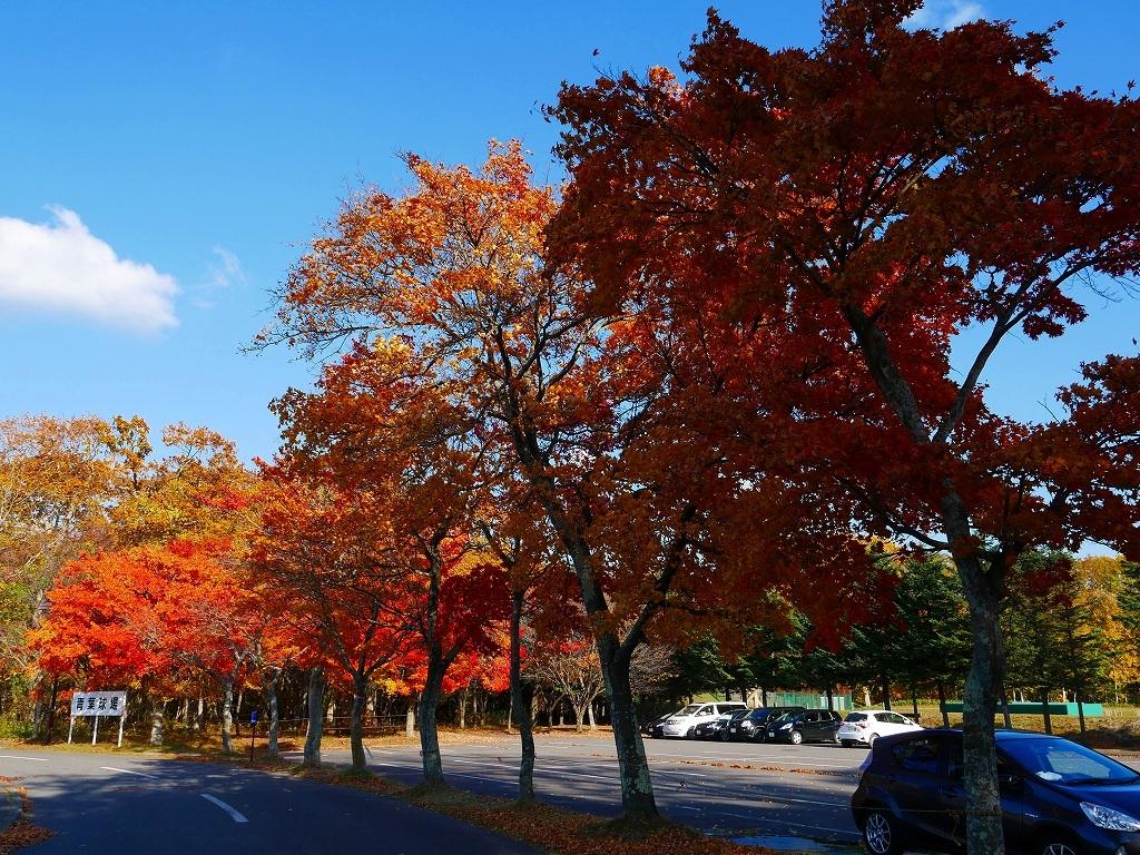青葉公園の紅葉、2019.10.23_f0138096_10544915.jpg