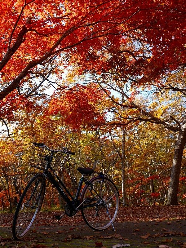青葉公園の紅葉、2019.10.23_f0138096_10550430.jpg