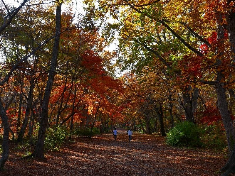 青葉公園の紅葉、2019.10.23_f0138096_10550729.jpg