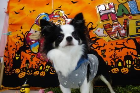 10月26日(土)ドッグラン大仙の様子(^^)_f0170713_17210368.jpg