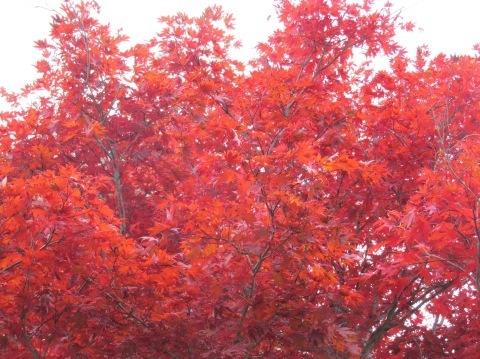 羽幌の秋深まっています!_d0072917_19141550.jpg