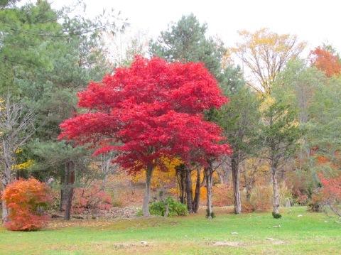 羽幌の秋深まっています!_d0072917_19144183.jpg