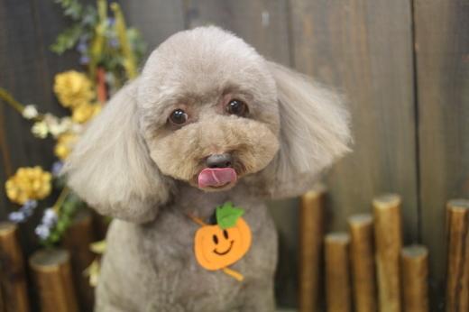 10月22日ご来店のワンちゃんです!!_b0130018_08461660.jpg