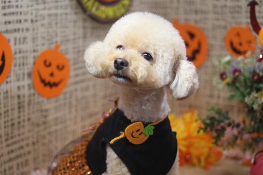 10月22日ご来店のワンちゃんです!!_b0130018_09050853.jpg