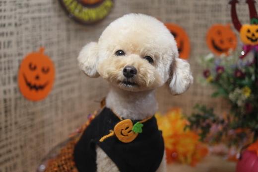 10月22日ご来店のワンちゃんです!!_b0130018_09051238.jpg
