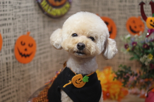 10月22日ご来店のワンちゃんです!!_b0130018_09051597.jpg