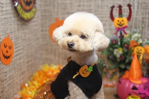 10月22日ご来店のワンちゃんです!!_b0130018_09052157.jpg
