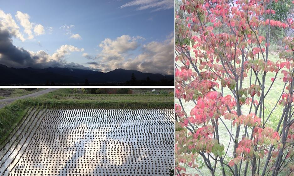 秋の色再び_a0212730_20420248.jpg