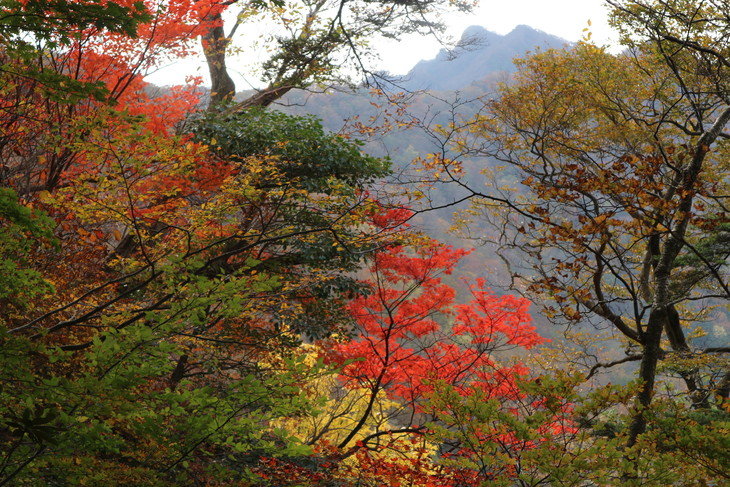 静かな山歩き(大障子岩&池の原展望所)_e0272335_19425259.jpg