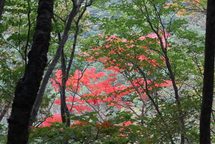 静かな山歩き(大障子岩&池の原展望所)_e0272335_20102988.jpg