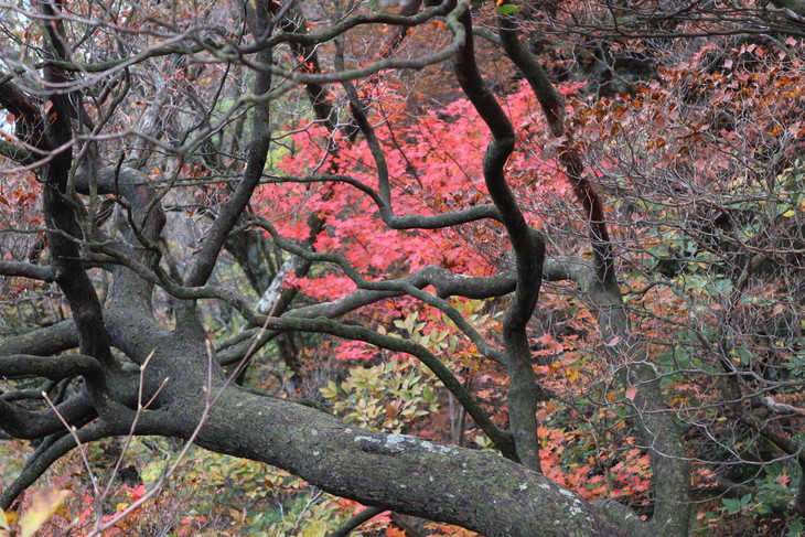 静かな山歩き(大障子岩&池の原展望所)_e0272335_20232687.jpg