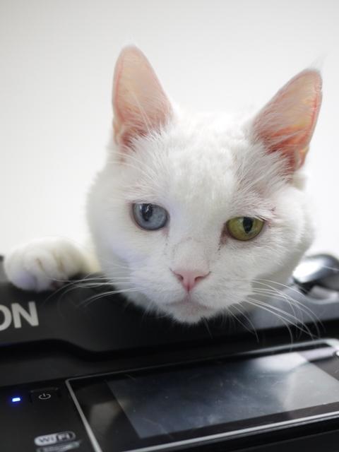 猫のお留守番 リュウちゃん編。_a0143140_21152198.jpg
