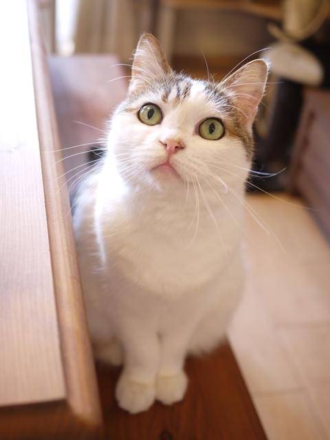 猫のお留守番 さくらちゃん編。_a0143140_21214388.jpg