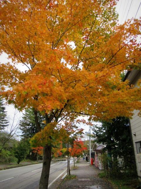 2019・軽井沢の紅葉速報③ * 10月26日の軽井沢駅前♪_f0236260_22272264.jpg