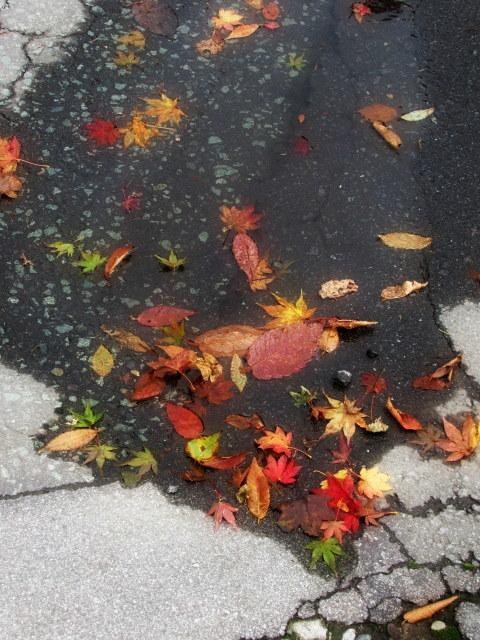 2019・軽井沢の紅葉速報③ * 10月26日の軽井沢駅前♪_f0236260_22315069.jpg