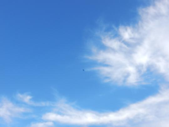 '19,10,26(土)「鴨のいる風景」と「光る海」!_f0060461_07593126.jpg