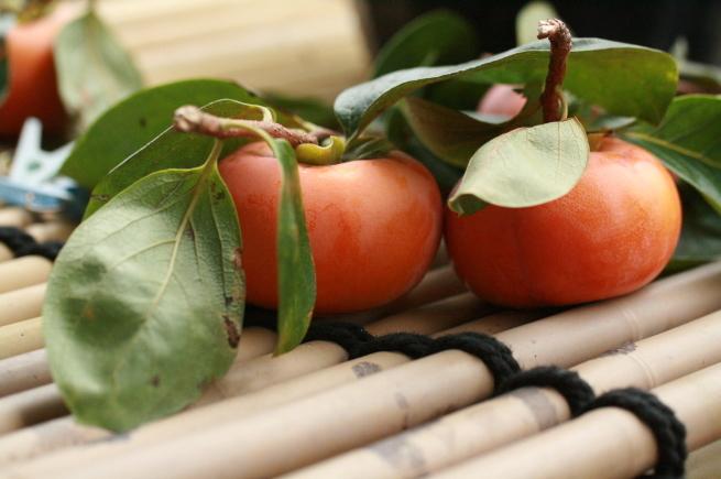 柿食へば_c0331864_15125402.jpg