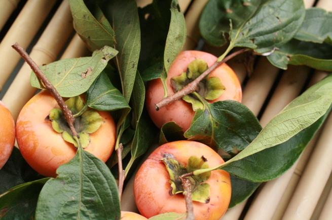 柿食へば_c0331864_15130595.jpg