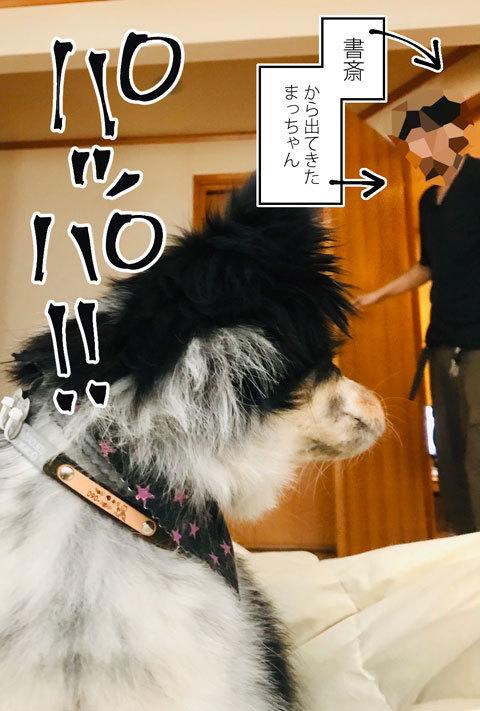 桐さん劇場_a0342172_16125999.jpg