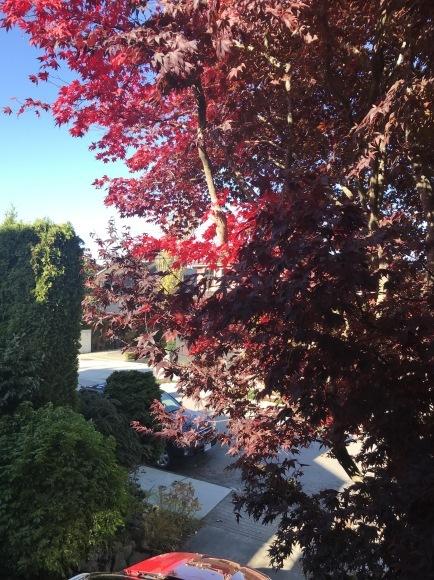 紅葉と和菓子_d0129786_07294228.jpg