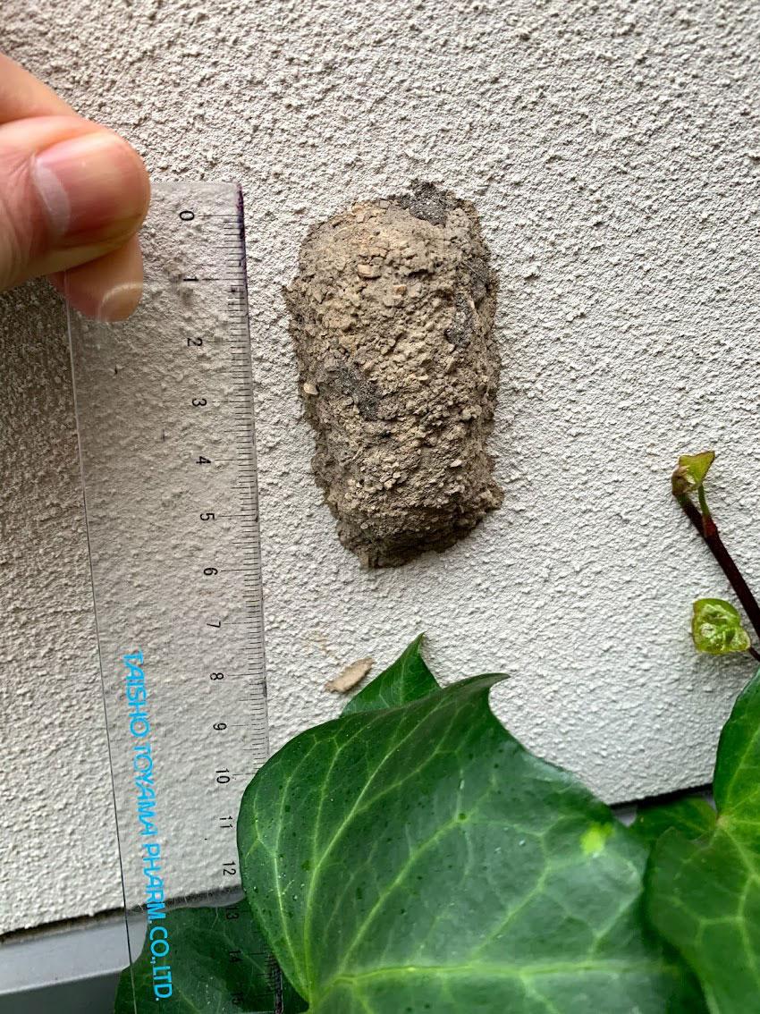 自宅の壁に土の塊ができているのを発見しました_b0025008_10363451.jpg