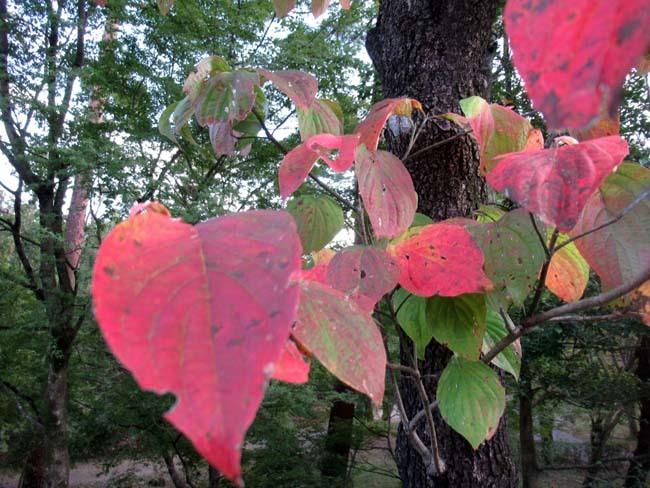 一気に秋が進んだ_e0048413_20404397.jpg