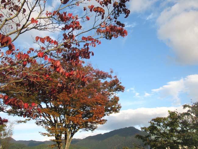 一気に秋が進んだ_e0048413_20405059.jpg