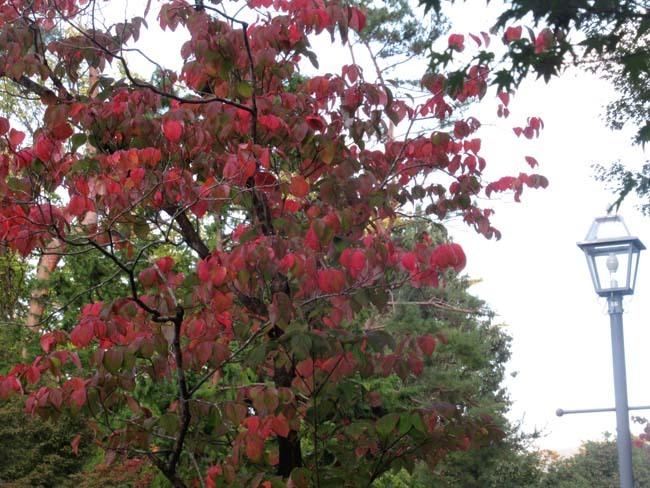 一気に秋が進んだ_e0048413_20405438.jpg