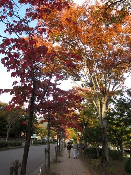 一気に秋が進んだ_e0048413_20405847.jpg
