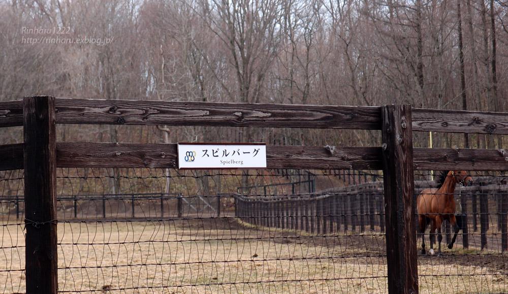 2016.4.4 社台スタリオンステーション☆スピルバーグ【Spielberg】_f0250322_19323514.jpg