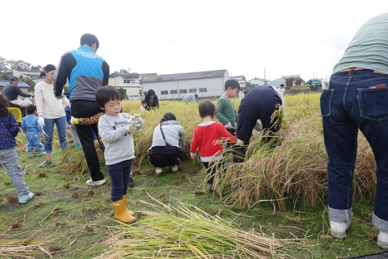 米作り~稲刈り~_a0212624_14470369.jpg