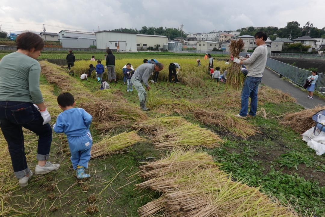 米作り~稲刈り~_a0212624_14585716.jpg