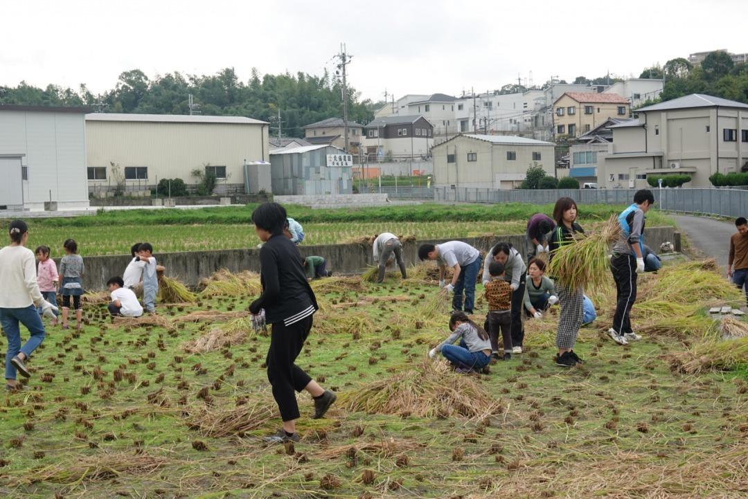 米作り~稲刈り~_a0212624_14585745.jpg